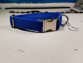 Royal Blue Velvet Collar